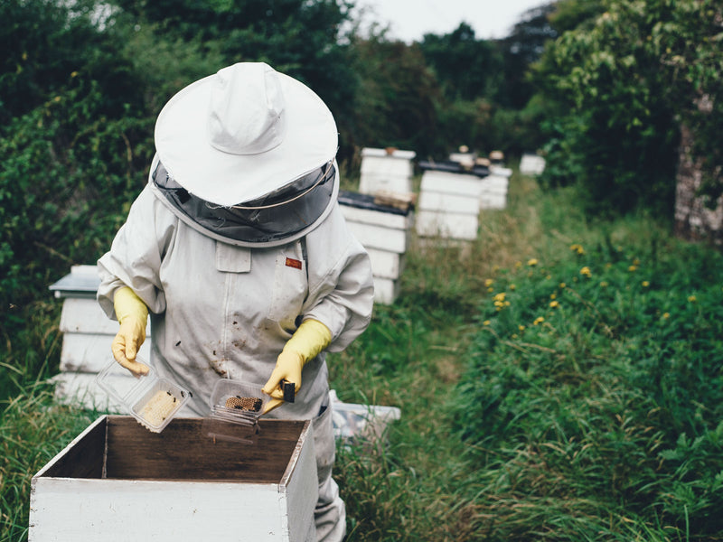 Beginners Guide to Beekeeping Course - Now Online
