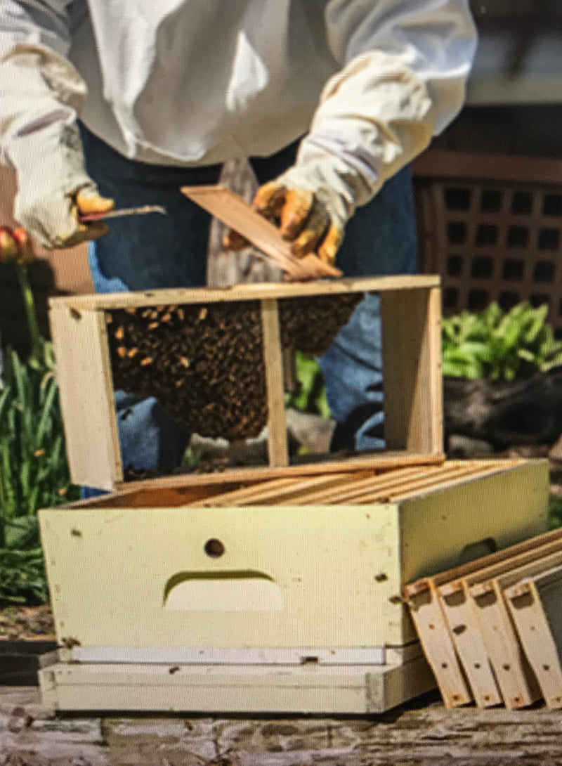 2019 Australian Bee Packages( 1.5 KG of Bees!!!) Awesome!