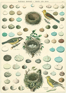 Birds, Nest, & Eggs Poster