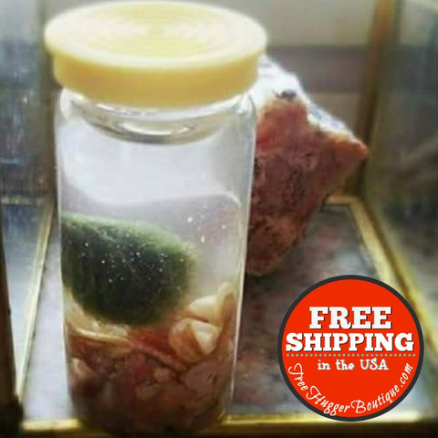 One Marimo Moss (Algae) In Tiny Glass Bottle With Irredescent Shell Pieces - Pet Supplies