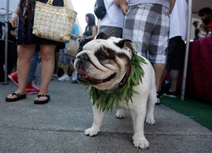 Marijuana poisoning on the rise in pets