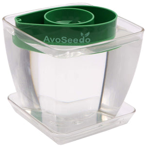 AvoSeedo DIY Clear/Green Avocado Tree Growing Bowl Set