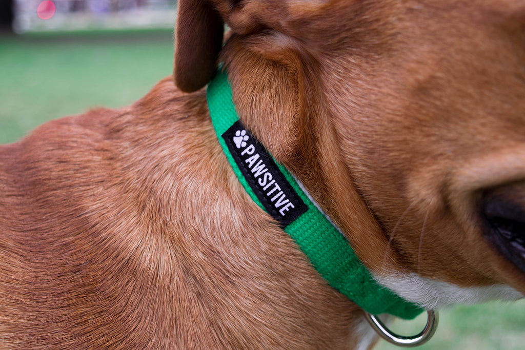 Pawsitive Pet Avocado Hemp Dog Collar: Various Sizes