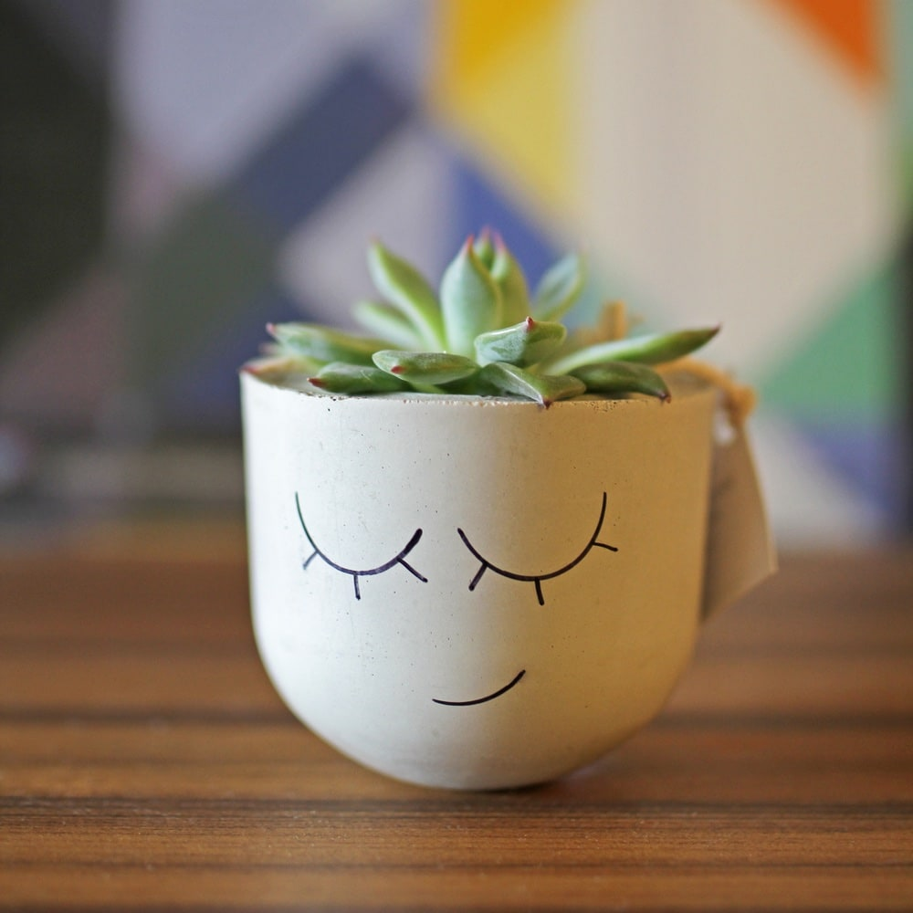 Tiny Plant in Handmade Pot