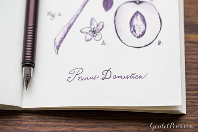 Diamine Damson - 30ml Bottled Ink