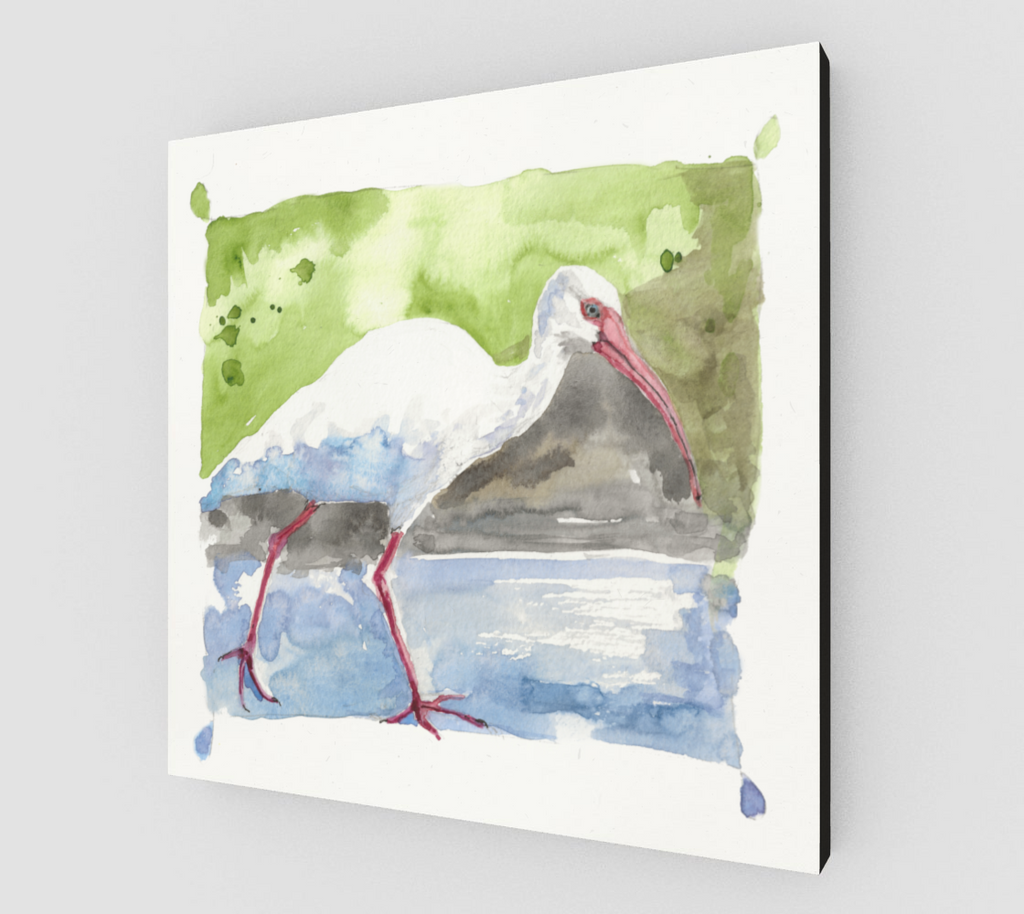 White Ibis Gallery Wrapped Canvas