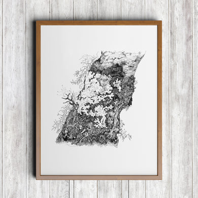 Hammered Shield Lichen Art Print