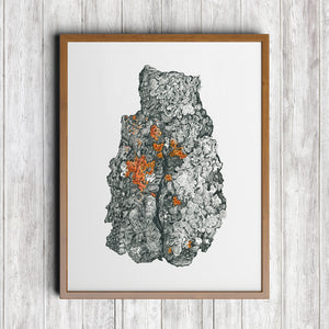 Hooded Sunburst Lichen Art Print