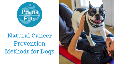 Top  Cancer Prevention Methods for Dogs