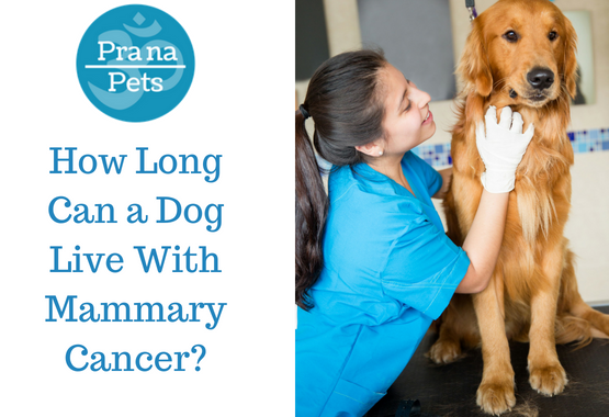 How Long Can a Dog Live With Mammary Cancer?