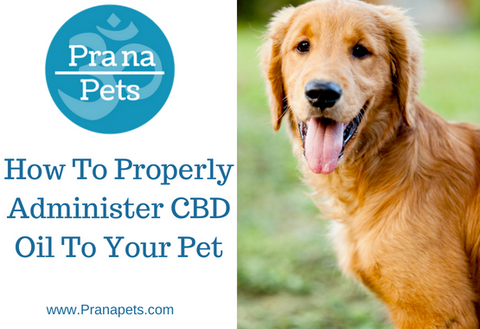 Best Ways To Administer CBD Oil To Your Pet
