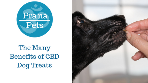 The Many Benefits of CBD Dog Treats
