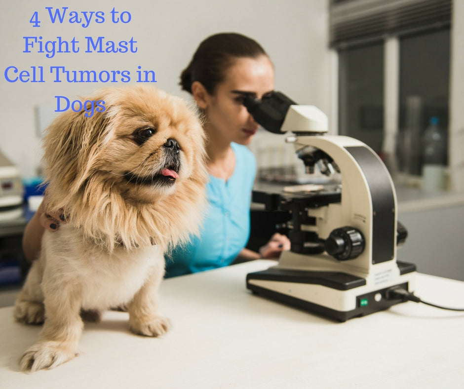 4 Ways to Fight Mast Cell Tumors in Dogs