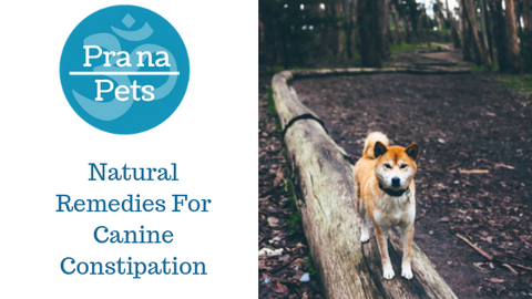 Natural Remedies For Canine Constipation