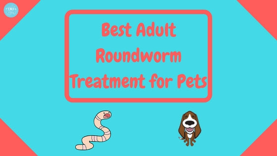 Best Adult Roundworm Treatment for Pets