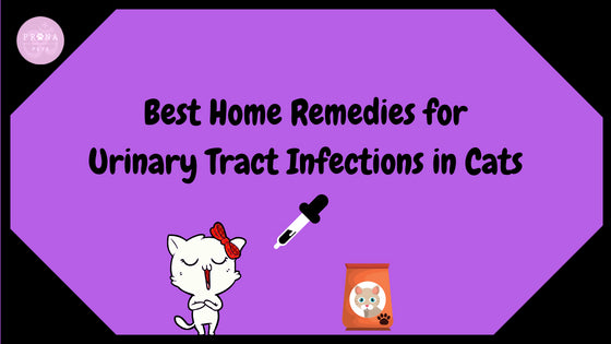 Home Remedies For Uti In Cats Pranapets Com Prana Pets