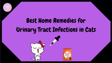 Home Remedies for UTI in Cats