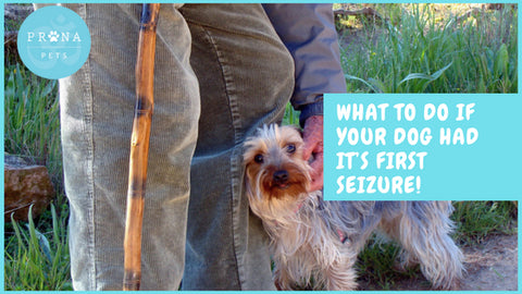 What to do if Your Dog Had it's First Seizure!