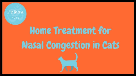 Home Treatment for Nasal Congestion in Cats