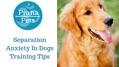 Does your dog have separation anxiety? Drugs VS herbals & Training tips