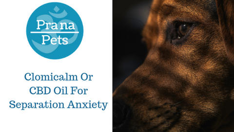 Clomicalm - First drug Approved for Separation Anxiety in pets - does it help?