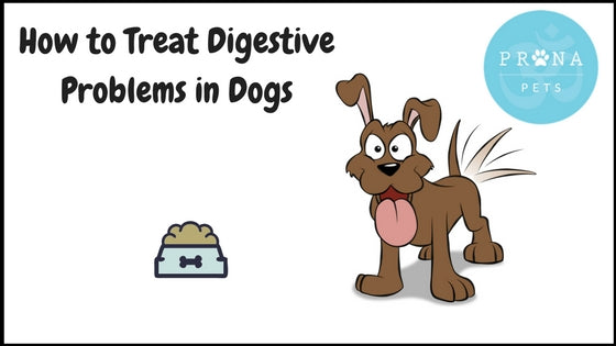 How to Treat Digestive Problems in Dogs