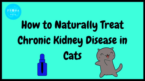 How to Naturally Treat Chronic Kidney Disease in Cats