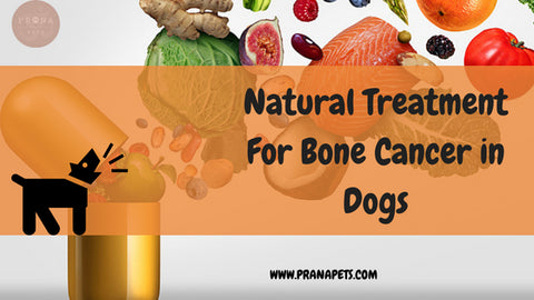 Natural Treatment For Bone Cancer in Dogs