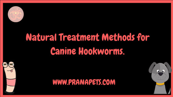 Natural Treatment Methods for Canine Hookworms.