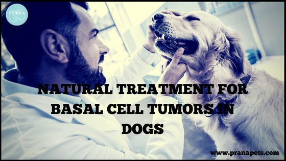 Natural Treatment for Basal Cell Tumors in Dogs – PranaPets