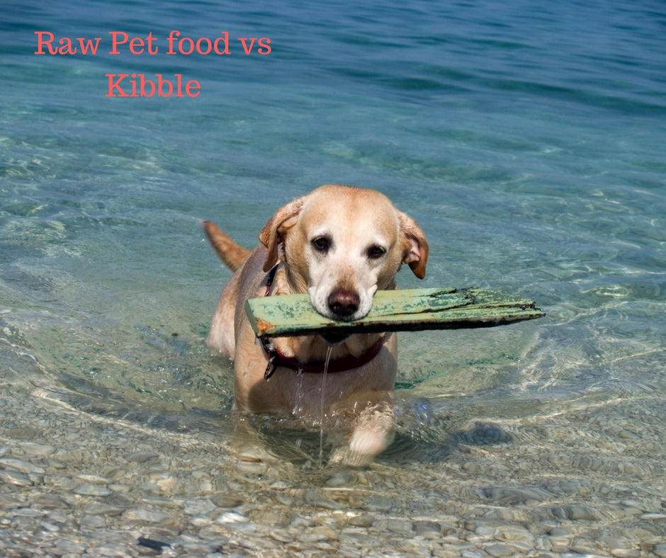 Raw food vs Kibble