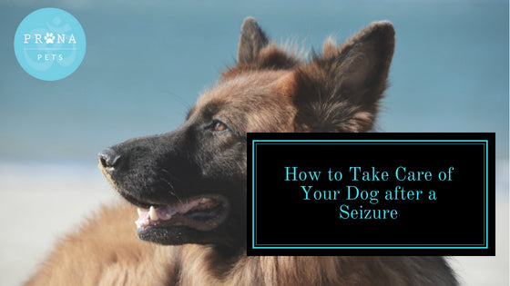 How to Take Care of Your Dog after a Seizure