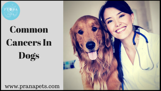 Common Cancers In Dogs