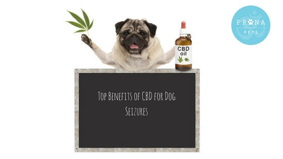 Top Benefits Of CBD For Dog Seizures