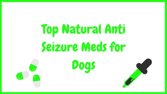 Top Natural Anti Seizure Meds for Dogs