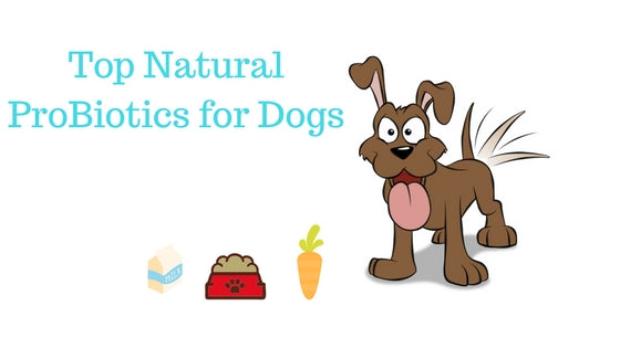Top Natural ProBiotics for Dogs