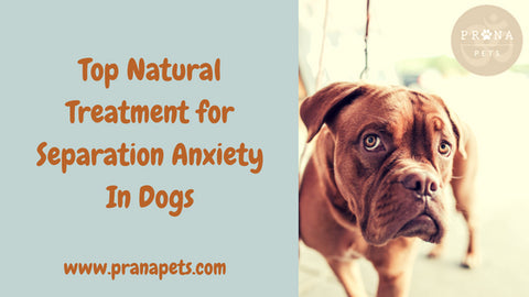 Top Natural Treatment for Separation Anxiety In Dogs