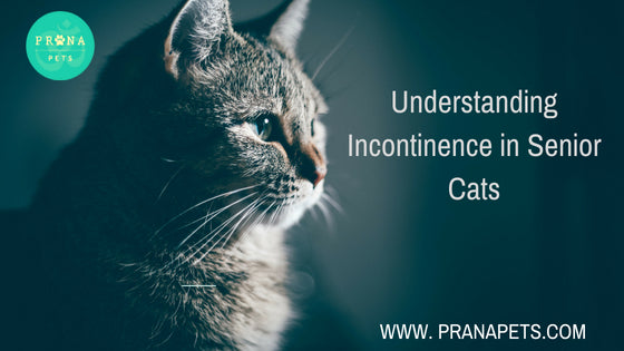 Understanding Incontinence in Senior Cats