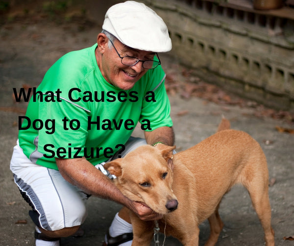 What Causes a Dog to Have a Seizure?