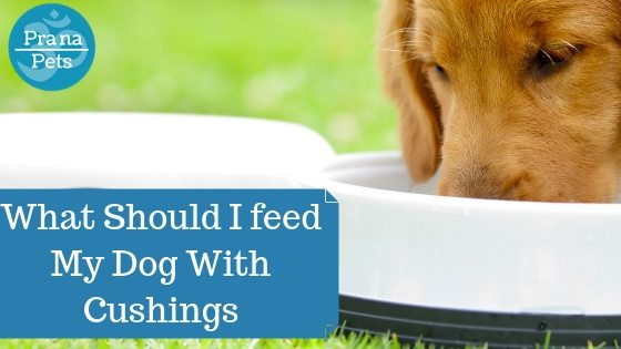 What Should I Feed My Dog With Cushings?