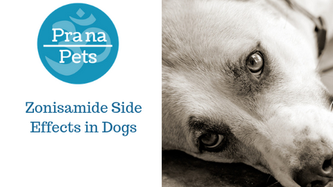 Zonisamide side effects in dogs