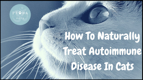 How To Naturally Treat Autoimmune Disease In Cats