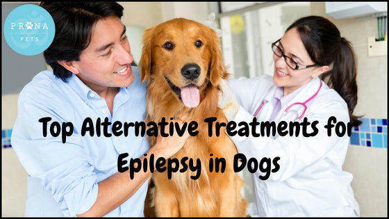 Top Alternative Treatments for Epilepsy in Dogs
