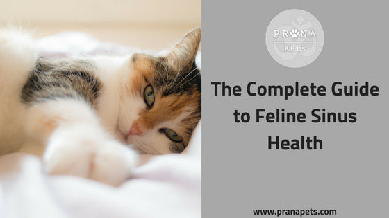 The Complete Guide to Feline Sinus Health