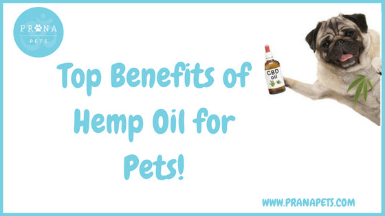 Top Benefits of Hemp Oil for Pets!