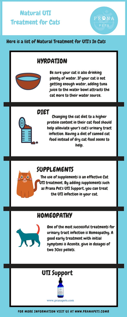 Natural UTI Treatment for Cats