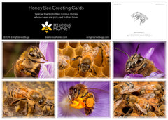 Honeybee Greeting Cards