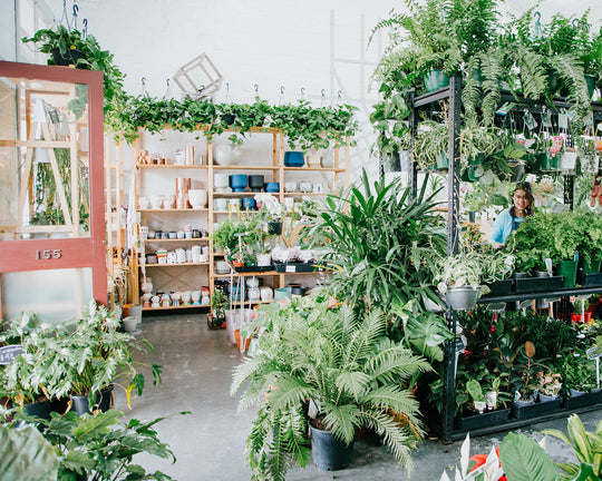 Image of our indoor plant store in Melbourne