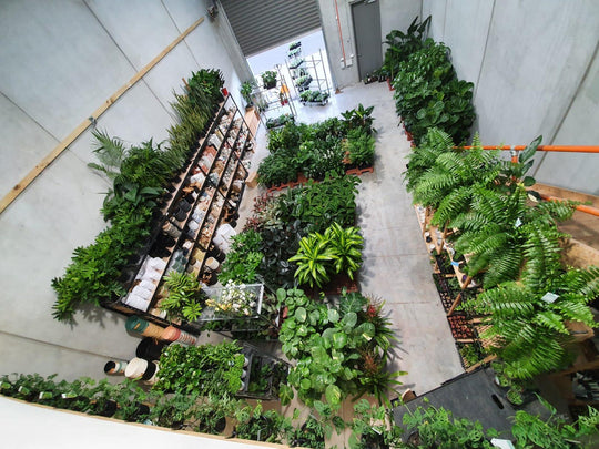 Image of our plant warehouse in Footscray