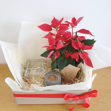 Christmas Treat Hamper 2